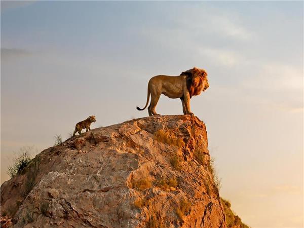 The Lion King (E)